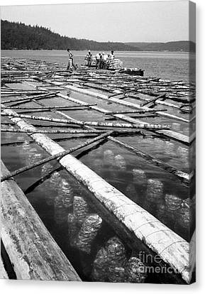 Canvas Print featuring the photograph Oystering Industry by Merle Junk