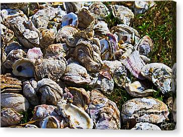 Oysters 01 Canvas Print by Melissa Sherbon