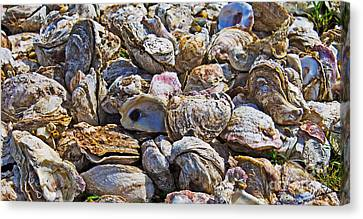 Oysters 02 Canvas Print by Melissa Sherbon