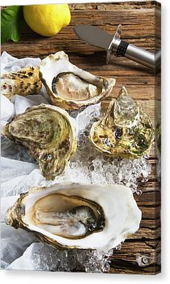Raw Oyster Canvas Print - Oysters On Ice (ostrea Edulis by Nico Tondini