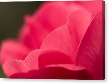 P Is For Pink Canvas Print