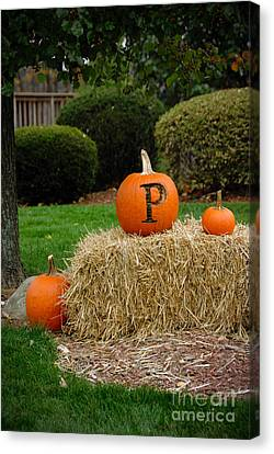 P Is For Pumpkin Canvas Print by Amy Cicconi