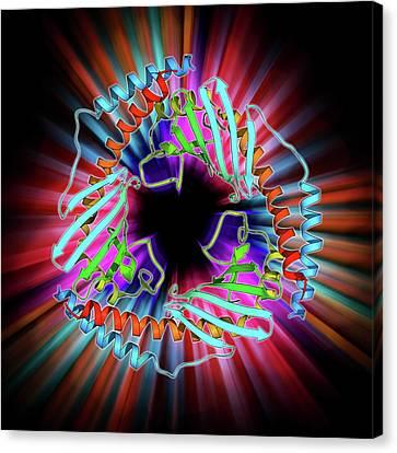 P32 Mitochondrial Matrix Protein Canvas Print by Laguna Design