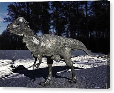 Pachycephalosaurus Canvas Print