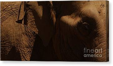 Pachyderm Panorama Canvas Print by Anna Lisa Yoder