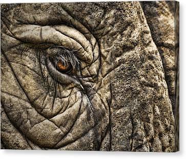 Pachyderm Skin Canvas Print by Daniel Hagerman