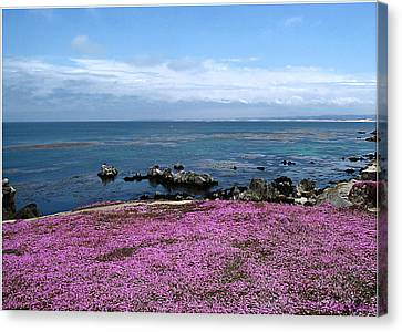 Canvas Print featuring the photograph Pacific Grove California by Joyce Dickens
