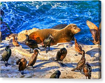 Canvas Print featuring the photograph Pacific Harbor Seal by Jim Carrell