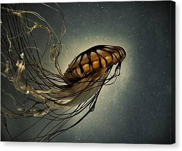 Pacific Sea Nettle Canvas Print by Marianna Mills