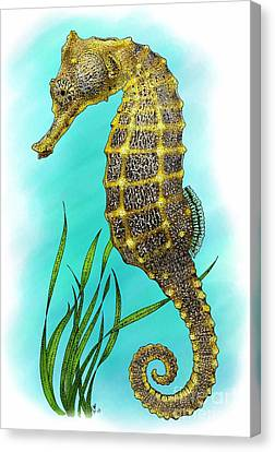 Pacific Seahorse Canvas Print by Roger Hall