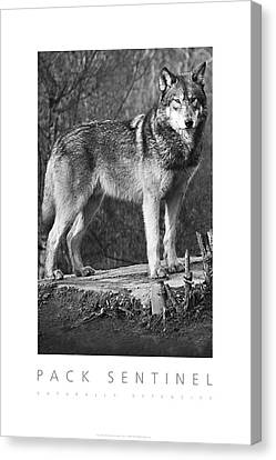 Canvas Print featuring the digital art Pack Sentinel Naturally Defensive Poster by David Davies