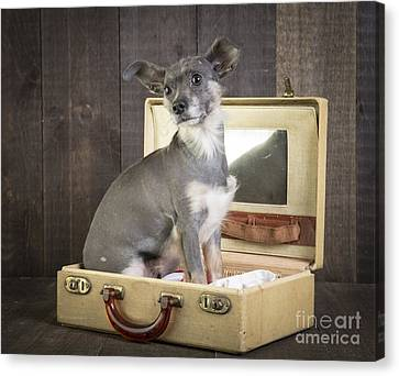 Packed And Ready To Go Canvas Print by Edward Fielding
