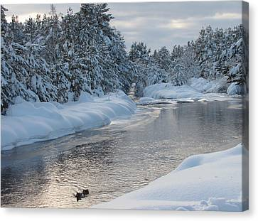 Paddling Up The Snowy River Canvas Print by Jacqi Elmslie