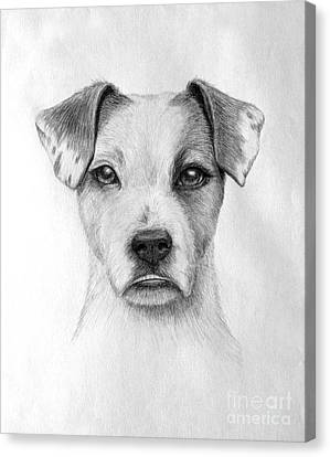 Canvas Print featuring the drawing Paige by Denise M Cassano