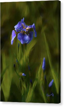 Painted Alaskan Wild Irises Canvas Print
