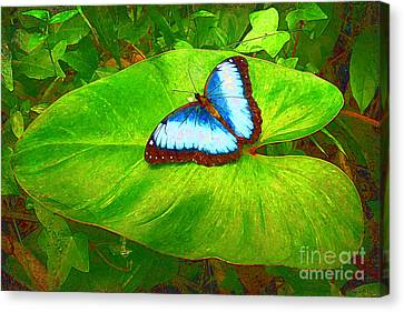 Canvas Print featuring the photograph Painted Blue Morpho by Teresa Zieba