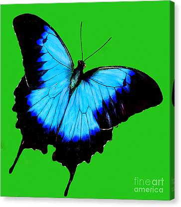 Painted Butterfly Canvas Print by Bob and Nadine Johnston
