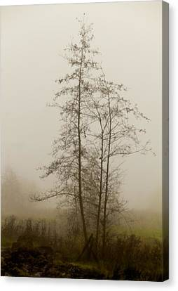 Painted By Weather Canvas Print by Odd Jeppesen