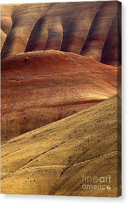 Painted Curves Canvas Print by Mike  Dawson