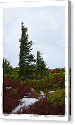 Painted Flagstaff Canvas Print by Diana Boyd