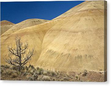 Canvas Print featuring the photograph Painted Hills Tree by Sonya Lang