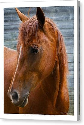 Painted Horse Canvas Print by Diana Boyd