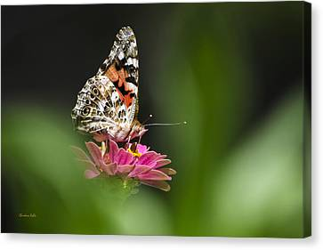 Painted Lady Butterfly At Rest Canvas Print by Christina Rollo