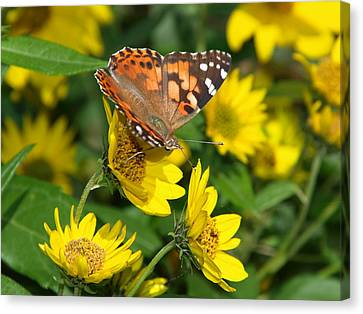 Canvas Print featuring the photograph Painted Lady by James Peterson