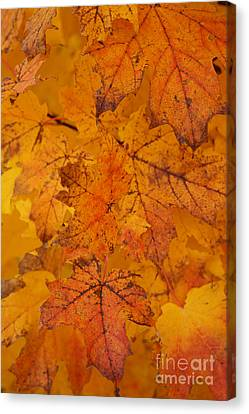 Painted Leaves Of Autumn Canvas Print by Linda Shafer
