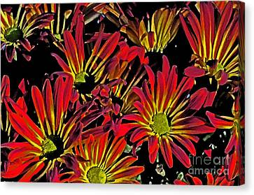 Canvas Print featuring the photograph Painted Mums by Judy Wolinsky