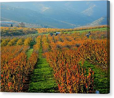 Painted Orchard Canvas Print