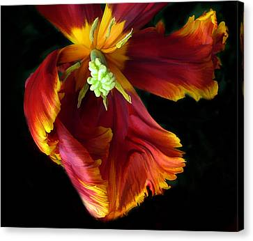 Macros Canvas Print - Painted Parrot Petals by Jessica Jenney
