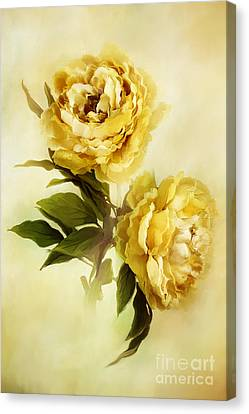 Painted Peonies Canvas Print by Stephanie Frey