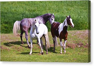Painted Pretty Horses Canvas Print by Athena Mckinzie