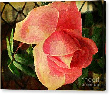 Painted Rose Canvas Print by Judy Palkimas