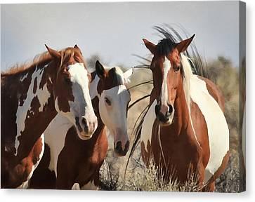 Painted Wild Horses Canvas Print by Athena Mckinzie