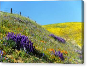 Painted With Wildflowers Canvas Print