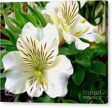 Painterly Alstroemeria Canvas Print by Kaye Menner