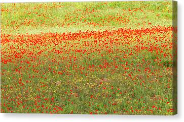 Painterly Effect On A Photograph Canvas Print