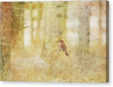 Painterly Image Of A Male Pine Grosbeak Canvas Print by Roberta Murray