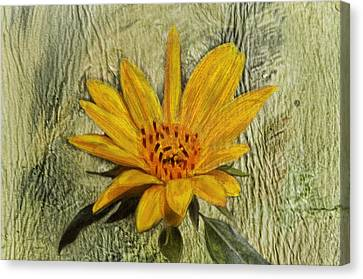 Painterly Sunflower Canvas Print by Sandi OReilly