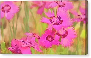 Painting Of Pink Flowers In A Garden Canvas Print by Ron Harris