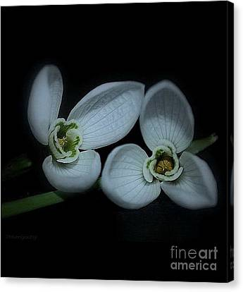 Canvas Print featuring the photograph Spring  Is Coming by Marija Djedovic