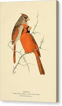 Pair Of Cardinals Canvas Print by Philip Ralley