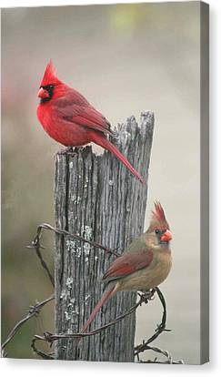 Pair Of Cards Canvas Print by Robert Camp