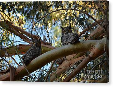 Pair Of Great Horned Owls Canvas Print