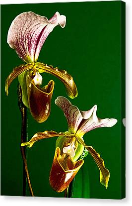 Pair Of Lady Slipper Orchids Canvas Print
