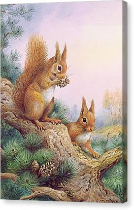 Pine Cones Canvas Print - Pair Of Red Squirrels On A Scottish Pine by Carl Donner