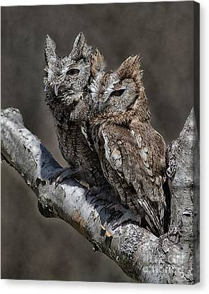 Pair Of Screech Owls Canvas Print