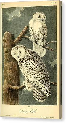 Pair Of Snowy Owls Canvas Print by Philip Ralley
